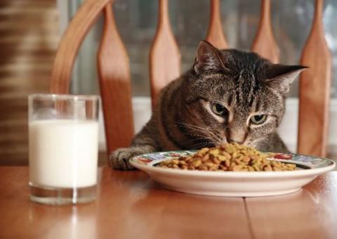 High Calorie Wet Cat Food